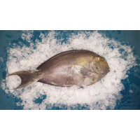 Рыба-хирург, Шри-Ланка, 1 кг