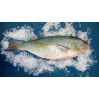 Рыба-попугай, Шри-Ланка, 1 кг