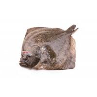 Тюрбо дикая, Марокко, 1 кг