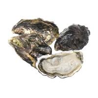 Устрица Blue Pearl, Новая Зеландия №3