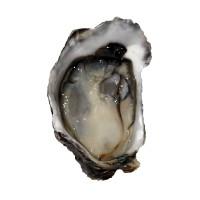 Устрица Blue Pearl, Новая Зеландия №1